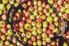 Unsere Äpfel im Waschgang.